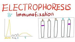 Electrophoresis, Immunoelectrophoresis and Immunofixation