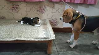 Deep conversation between father & daughter | Leo & Lilly |Leo The Beagle