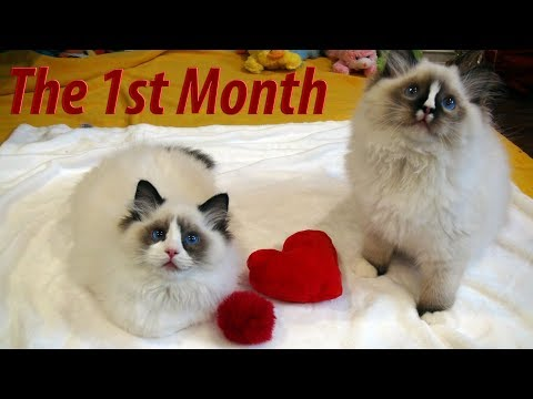 Rosey's Kitty Vlog #17- 1st Month With The New Kittens