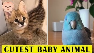 Cute Baby Animals Video Compilation | Cute Baby Animals #2 | Cute Moment Of The Animals | Cute Dose