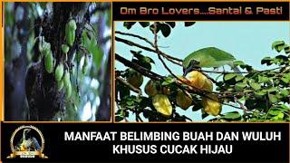 Manfaat Buah Belimbing Untuk Burung Trucukan