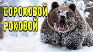 🐻 МЕДВЕДЬ ШАТУН! Встреча с медведем подранком! Случай в тайге!