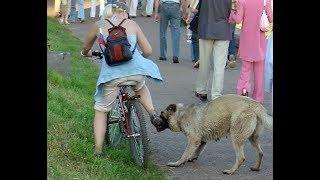 Ультразвуковой Отпугиватель Собак. Проверка на улице. Купить в Перми с Доставкой