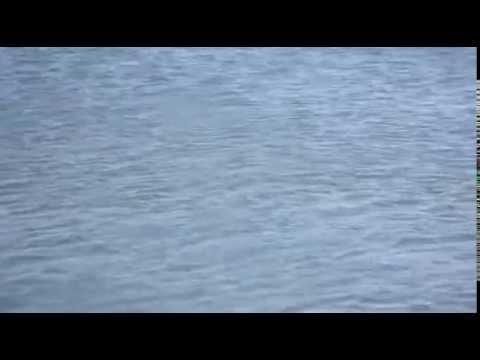 Футаж вода волны