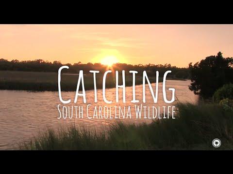 Catching Wildlife Along the South Carolina Coast