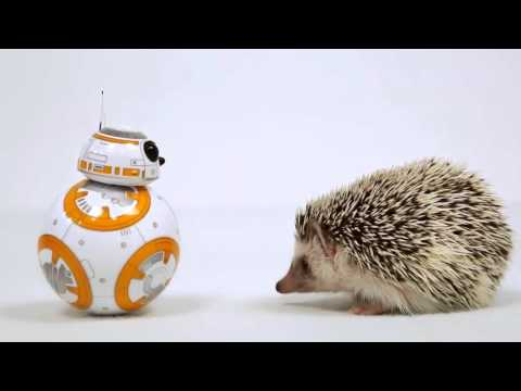 STAR WARS THE FORCE AWAKENS - Cute BB-8 Interacts With Cute Hedgehog Commercial