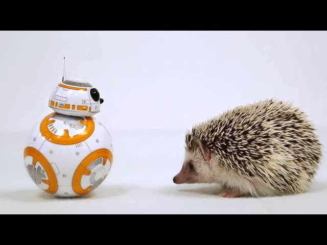 STAR WARS THE FORCE AWAKENS – Cute BB-8 Interacts With Cute Hedgehog Commercial