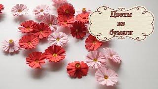 Цветок из бумаги / Квиллинг / Цветущий кактус