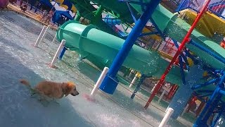 Dog Poops in a Water Park (Super Pooper Sunday #37)