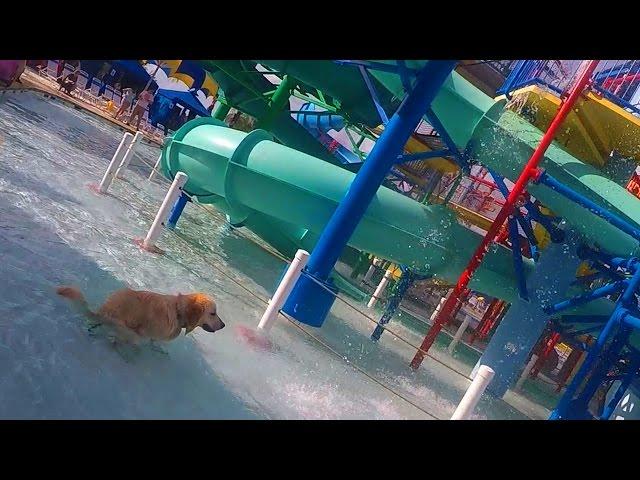 Dog Poops in a Water Park (Super Pooper Sunday #37)