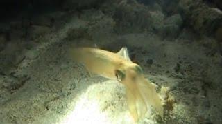 Мир подводной охоты - 364 - Риф Blue Hole