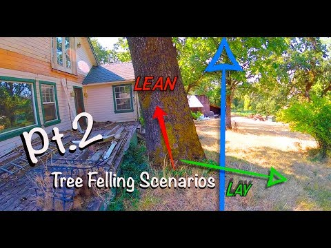 Tree Felling Scenarios Pt.2