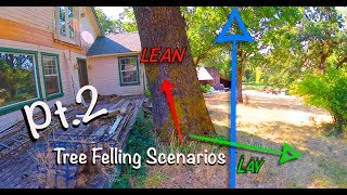 Tree Felling Scenarios Pt.2