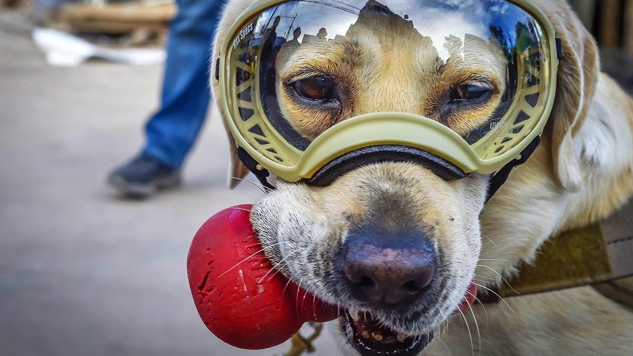 Rescue Dog Gets Send-Off She Deserves