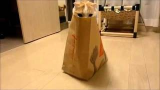 Cat in a Bag Hiding!