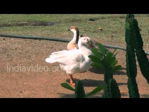 Animal life at Sanchi