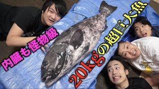 フィッシャーズと20kg超えの超巨大魚さばいたらこうなるwwww
