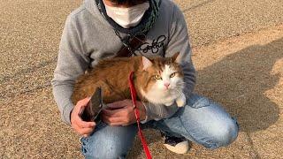 散歩でヘタレを返上できた猫