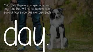 How Do I Train My Dog To Be Calm?