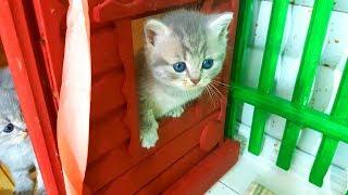 КОТЯТА ОНЛАЙН. Стрим и маленький котенок