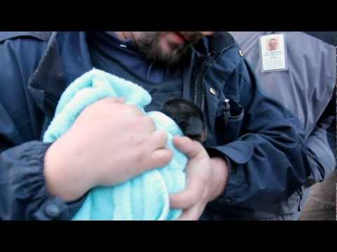 Heroes Tear Up House To Save Puppy