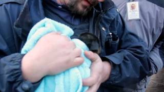 Trapped Puppy Rescued from Underground Pipe