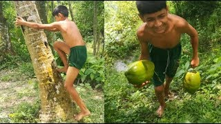 How To Climb Coconut Tree Without Anything Lifeispositive