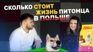 Сколько стоит жизнь домашних животных в Польше