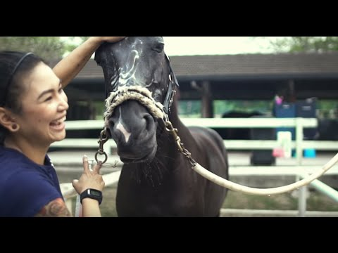 Singapore Jobs: Working With Horses