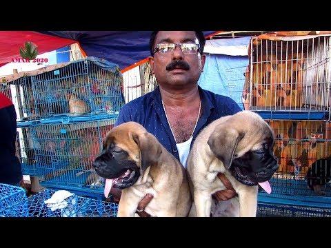 DOG PUPPY SELLER AT GALIFF STREET PET MARKET KOLKATA   16TH JUNE 2019   WITH SELLER CONTACT NO.