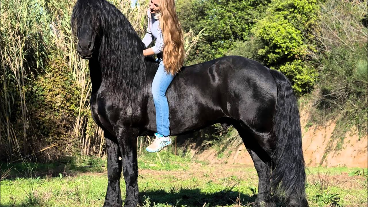 Wallpaper Black And White Girl Caballo Frison Youtube
