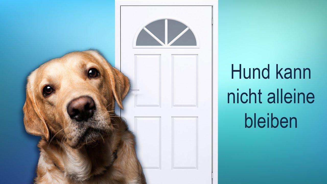 mein hund kann nicht alleine bleiben was tun youtube. Black Bedroom Furniture Sets. Home Design Ideas
