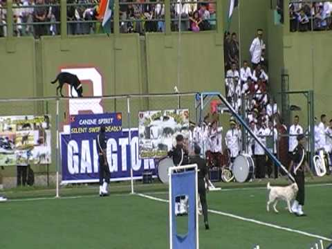 Indian Army Dog Show