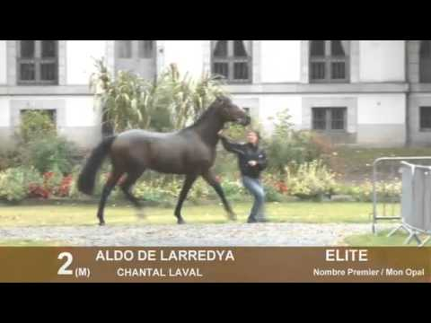 Show Anglo Tarbes 2012 - Lot 1 a 26