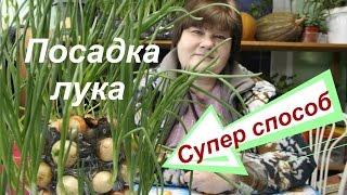 Лук на зелень. Выращивание лука. Супер способ.