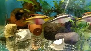 Основной корм для аквариумных рыб своими руками. The main food for aquarium fish with their hands.