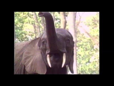 aurlus mabele - aurlus elephant