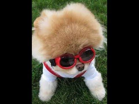Cutest Dogs In The World 2015 Goldenacresdogs Com