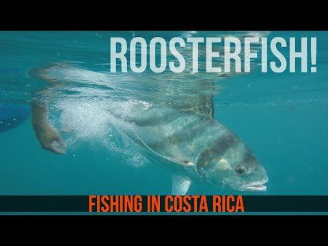 Pura Vida Rooster Fish In Costa Rica - Day 3