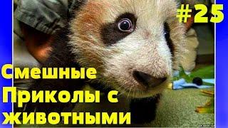 Приколы с животными 2016,funny animals #25