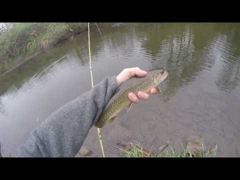 Fly Fishing - Pine Creek Section - Valley View, PA 2017