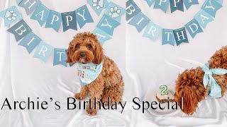 Archie The Cavapoo's Birthday Vlog | Archie & Alfred