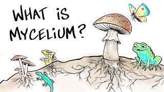 What is Mushroom Mycelium?