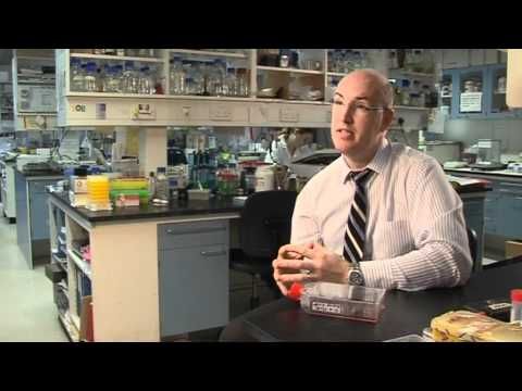 Dr Patrick Kiely on finding out why some breast cancer cells spread around the body