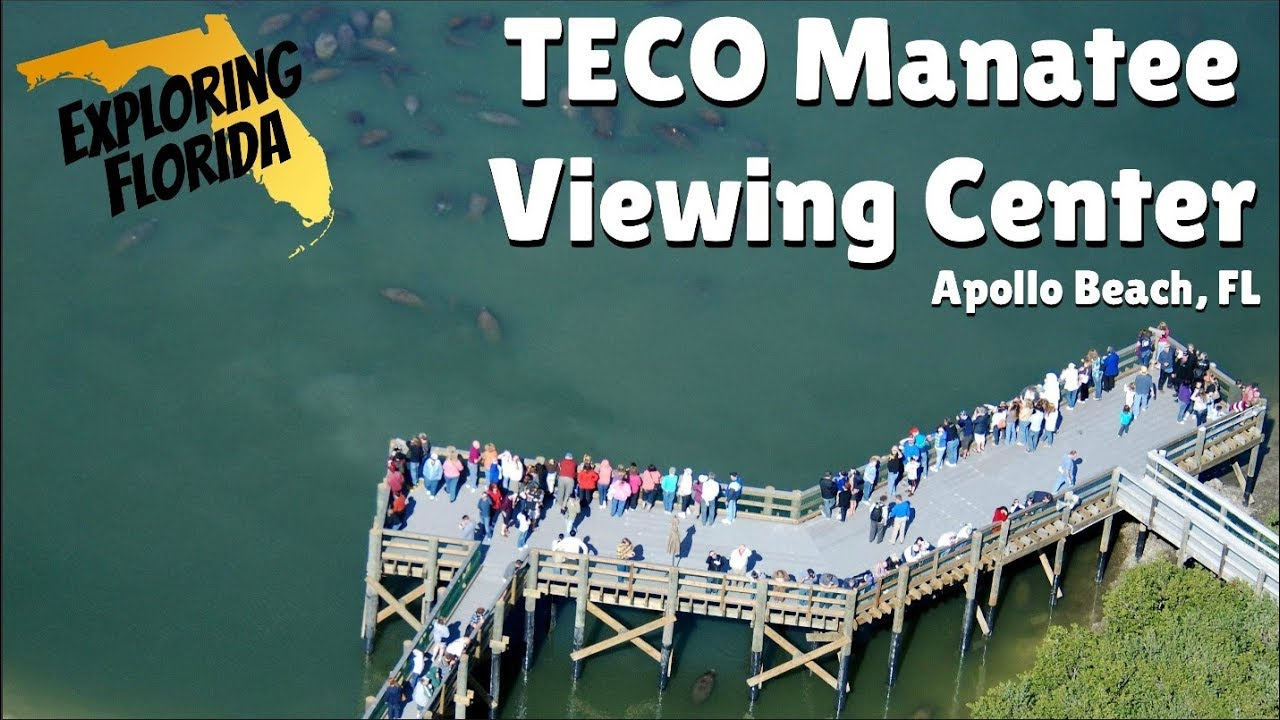 Exploring Florida Teco Manatee Viewing Center In Apollo Beach Fl