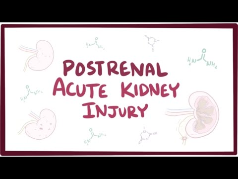 Postrenal acute kidney injury (acute renal failure) - causes, symptoms, & pathology