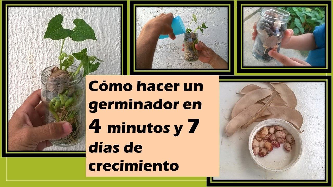 Cómo hacer un germinador para niños [  caraotas  o frijol en 7 dias]
