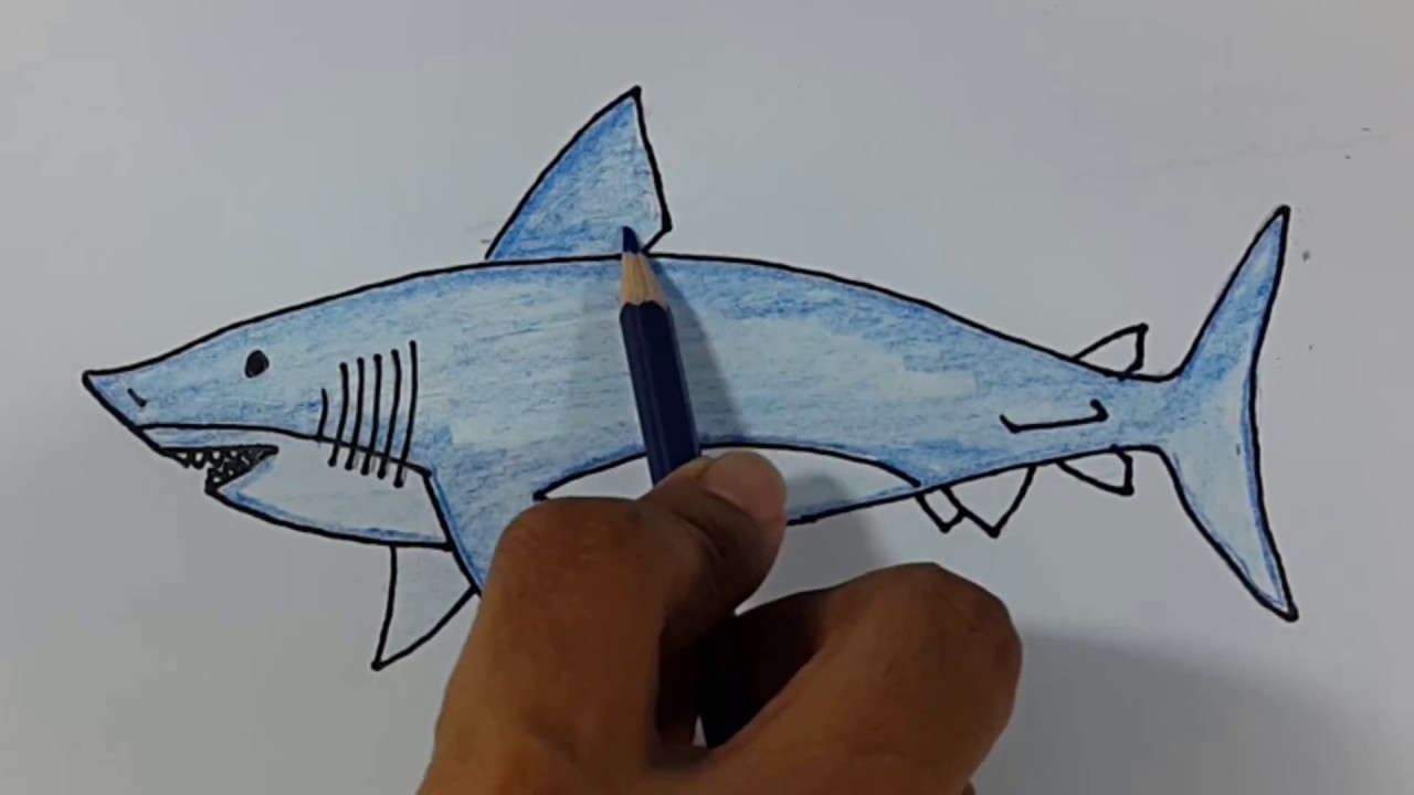 Cara menggambar dan mewarnai ikan hiu dengan mudah menggunakan ...