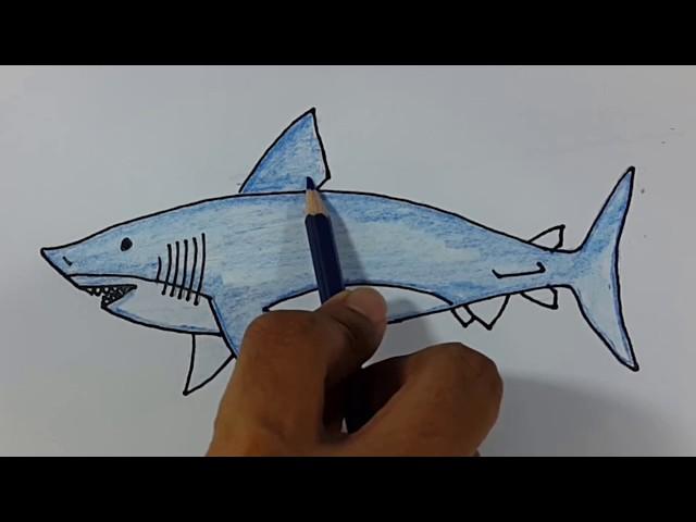 contoh gambar mewarnai ikan paus
