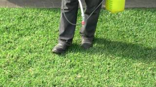 Empire Zoysia Turf | QLD's Michael Hagan Shows How To Look After Your  Empire Lawn